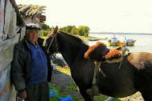 Viejo, caballo de mar