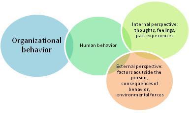 internal organization of an essay