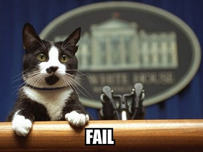 obama cat