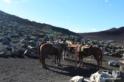 Sunrise and Tours at Haleakala Volcano Crater: Our horses ready for the Horseback Tour Ride with the Pony Express.