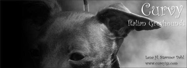 Curvy Italian Greyhounds