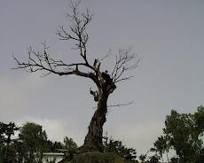 Árvore da Blogomania