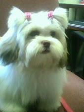 Penélope, maluquinha!(cachorrinha nº 2)