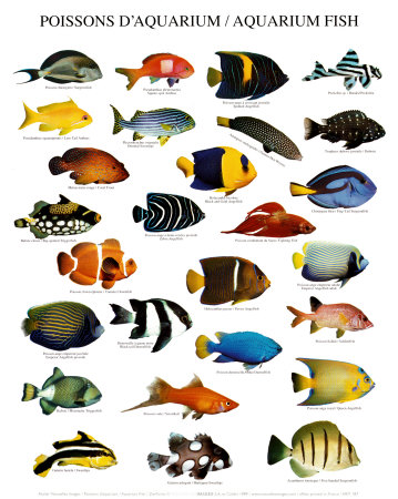 Saltwater Aquarium Tips: types of fish aquarium
