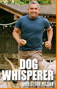 Canine Ambassador