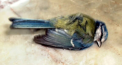 broken+bird