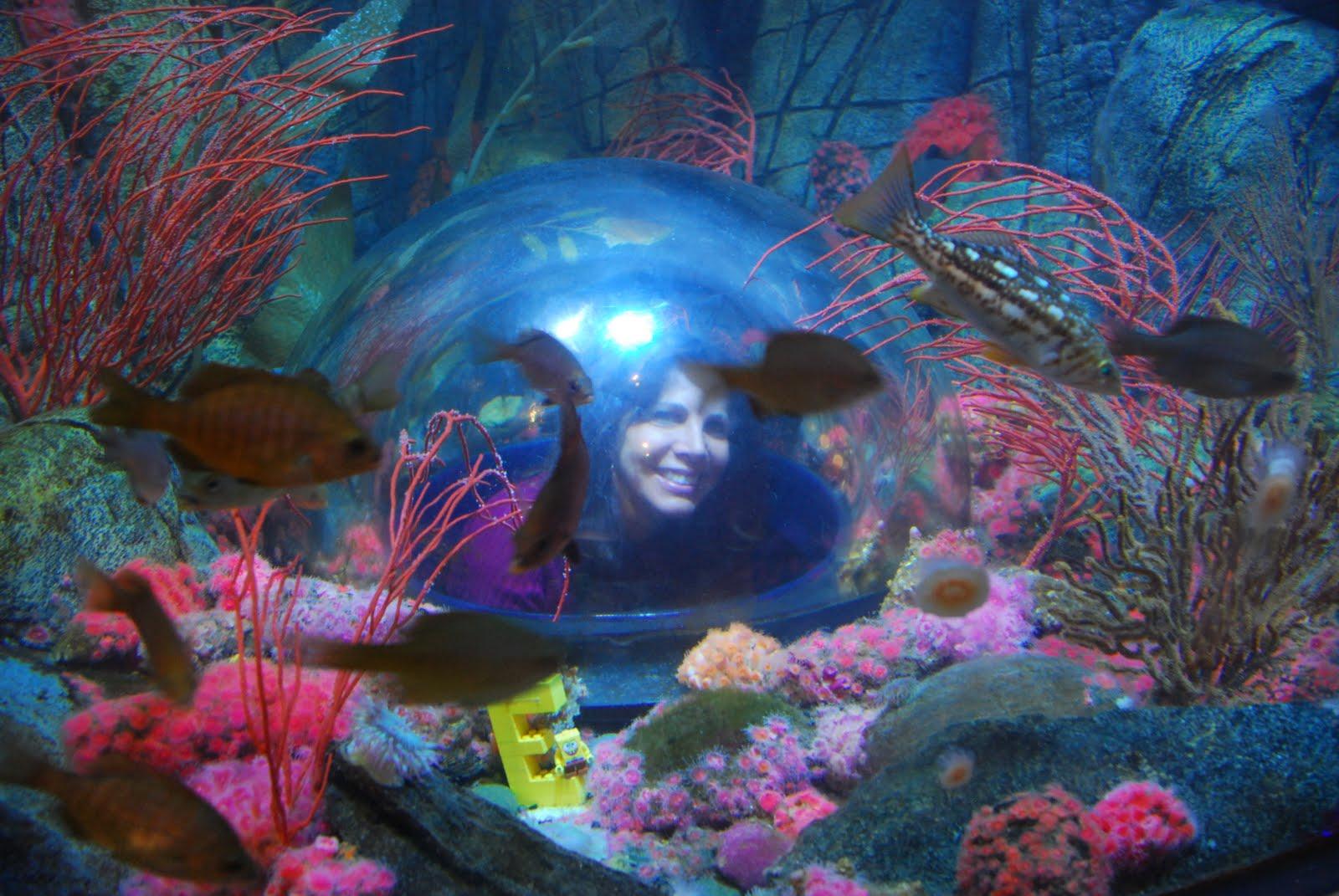 Updates From The Copper State Sea Life Aquarium