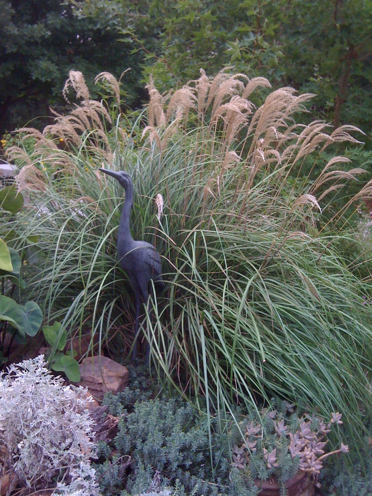 Signature gardens grasses not just for lawns anymore for Tall grass garden