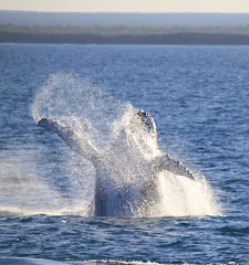 Kimberley Whale Watching Tours 2011