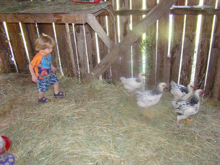 grandson helping wake up the chicks