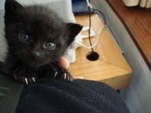 Artesanato para ajudar os felinos das: Bolinhas de Pêlo