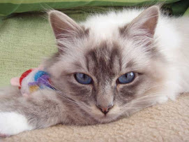 Los gatos de Franziska