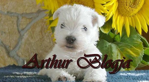 Arthur blogja