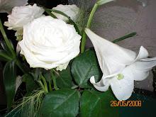 weiße Rose und weiße Lilie