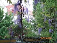 mein Balkon/balkonum