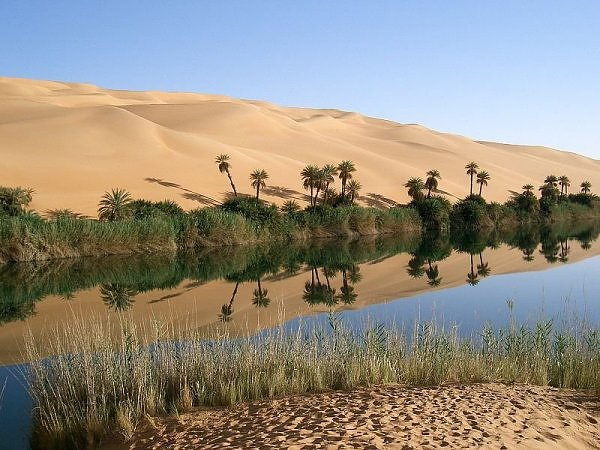 Picture of an oasis in the sahara desert