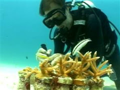 guy saving the reefs