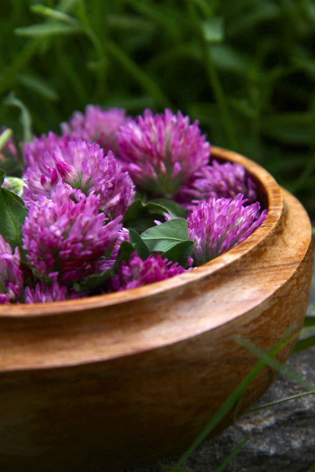 Wild About Red Clover