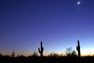 stars, cactus, saguaro, night, dusk