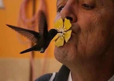 beso de Colibrí