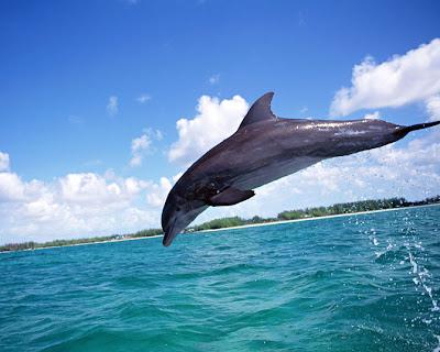 Fotos de Delfines - Libres y Felices