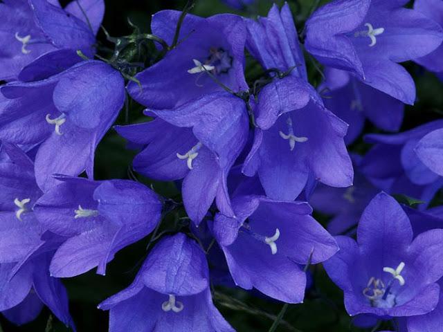 Fotos de Hermosas Flores 10