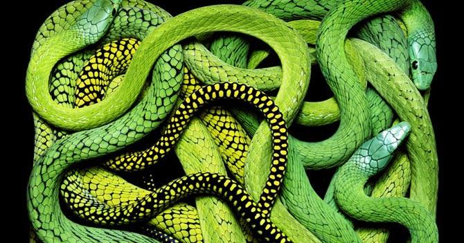 Особенно если змея во сне была большая и агрессивная.
