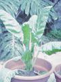 Comida bajas calorias: cultivar en macetas