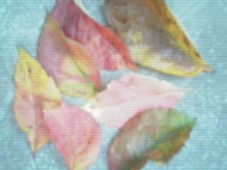 Es momento de recolectar hojas
