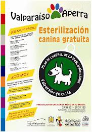 Esterilización canina gratuita en Valparaíso