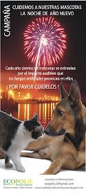 Cuidemos a nuestros animales de compañia, la noche de año nuevo