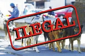 Para objetar ordenanzas caninas ilegales en Chile