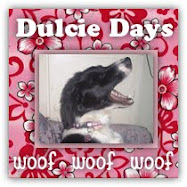 My Dulcie doggy's blog!