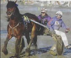Gurion fra Finnmark, vinner 2007,