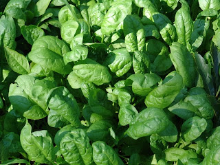 Spinach for eyesight protection