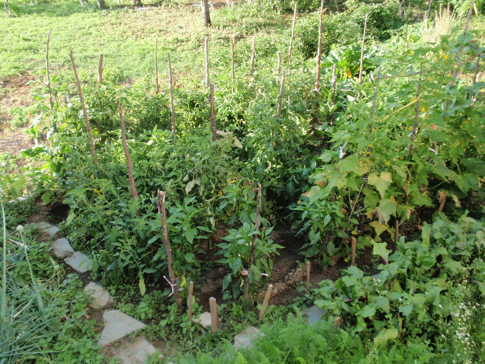 Με κήπο και λαχανικά