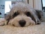 Gilby