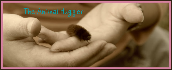 The Animal Hugger