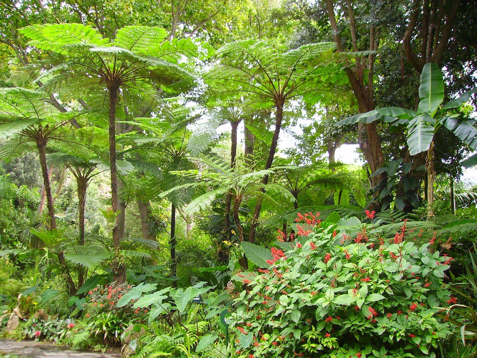 Vivere il verde emozioni saperi sapori andar per giardini la mortella forio d 39 ischia - Giardino la mortella ...