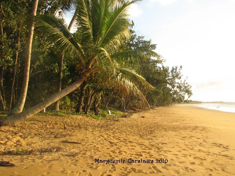 how to kill a coconut tree australia