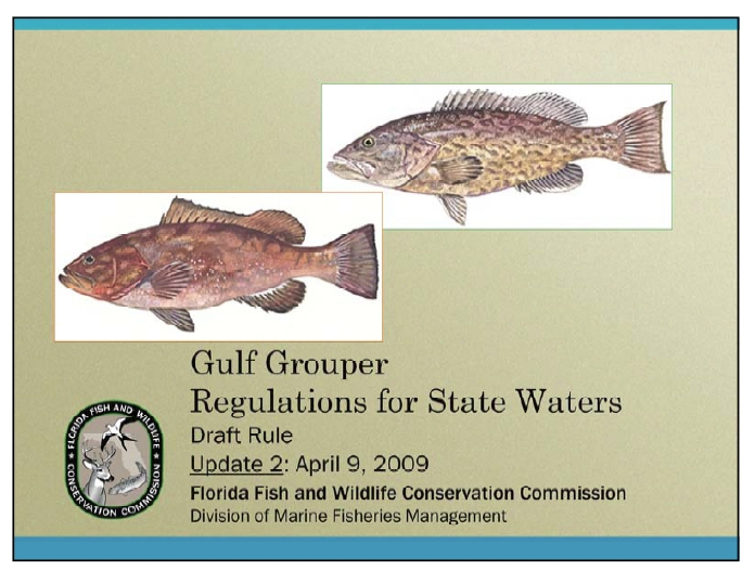Commercial grouper out for Florida commercial fishing license