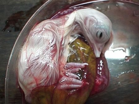 Cómo nacen los pollos?!!!!! Impresionante!!!!!