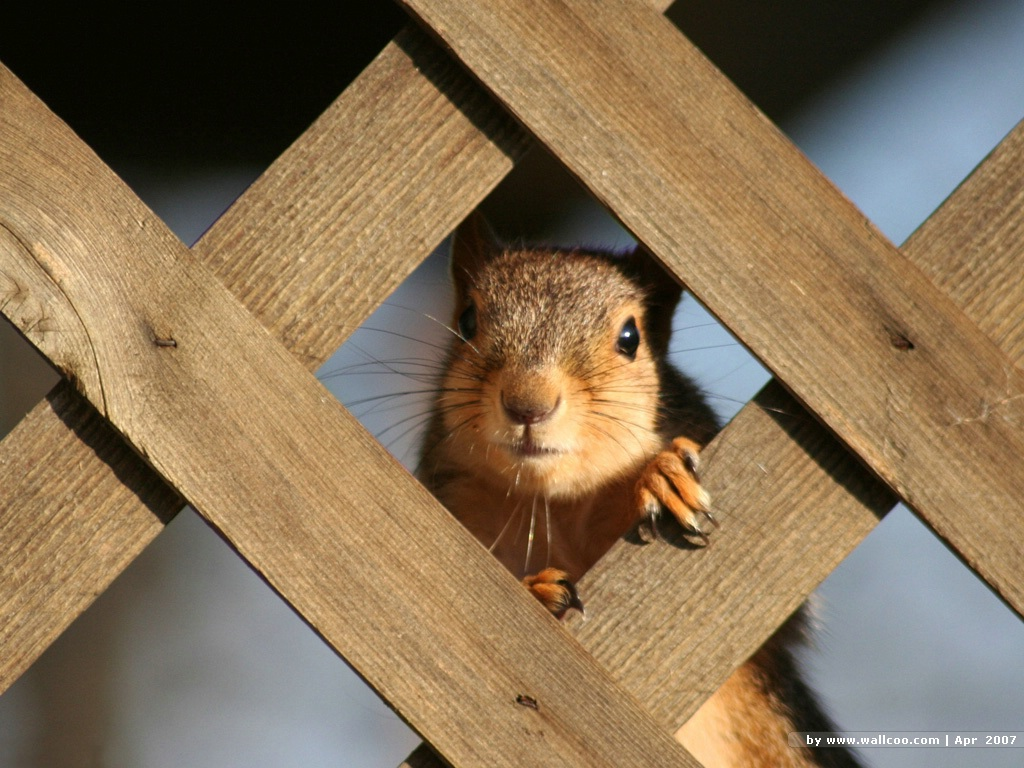 http://3.bp.blogspot.com/_1Qgz-lJ2_kY/TFip1JtouWI/AAAAAAAAANk/_kAwwiztSHQ/s1600/squirrel_desktop_wallpaper_1.jpg