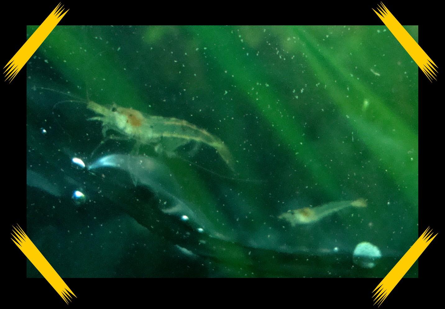 Petit aquarium crevette for Vente aquarium complet