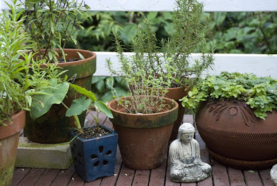 Superbe Fall Container Gardening, Hawaiu0027i Style