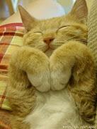 ~i heart cat~