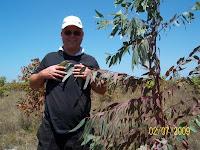 Dexter Dombro with Eucalyptus pellita