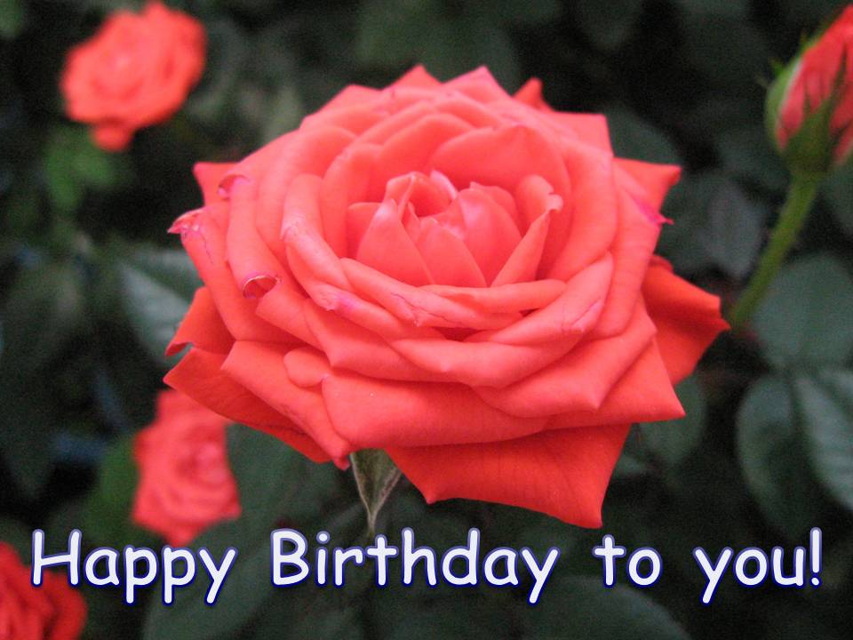 The following is a Free Flower Birthday Card template printable.