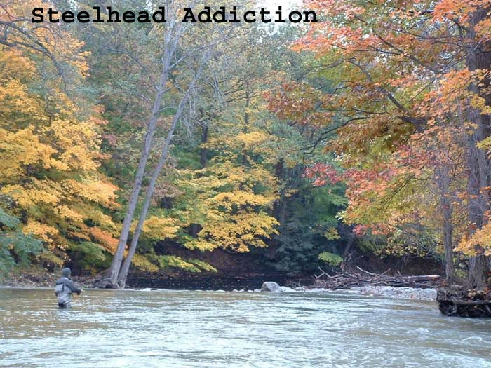 Steelhead Addiction