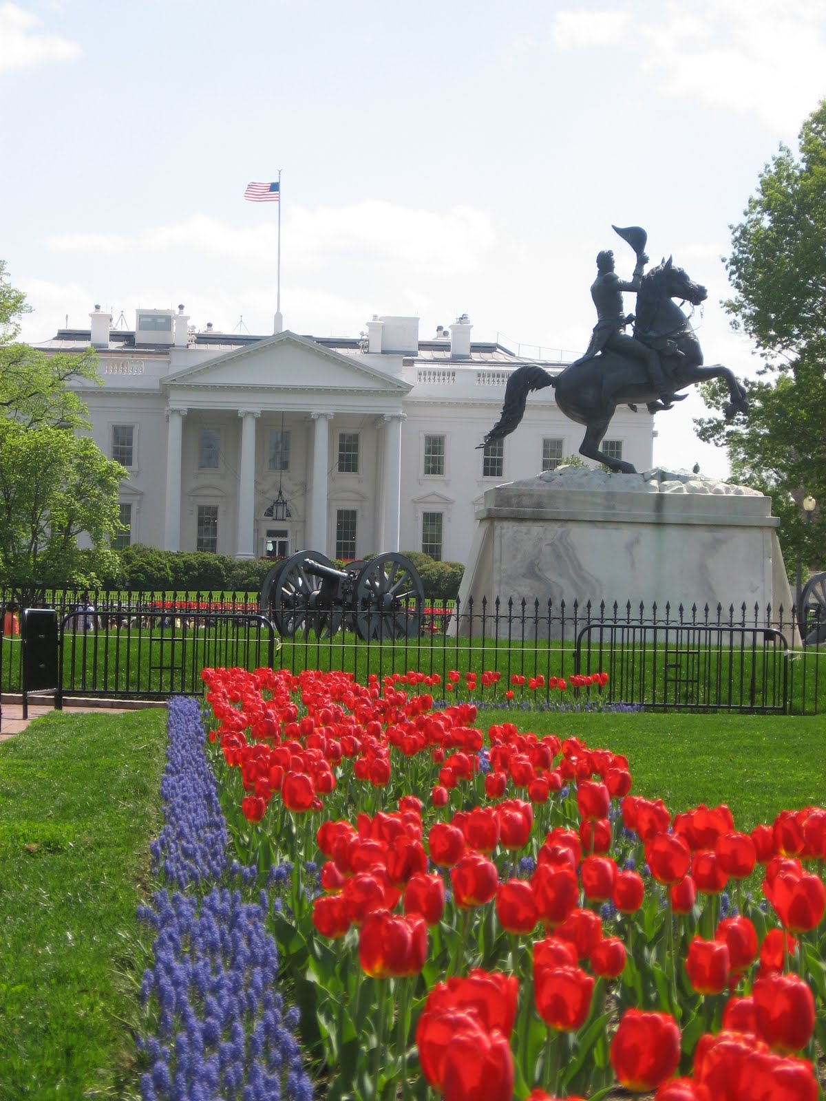 Gramee Report Red White House Tulips